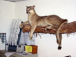 mtn-lion-reception.JPG