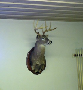 8 Point Deer Head at the Eagle Club