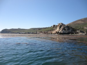 Avila Beach Port San Luis Seaweed Express Kodiak Tour