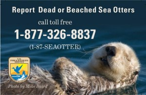 Report sea otter poster