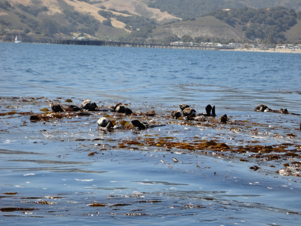 Avila Beach Port San Luis Seaweed Express
