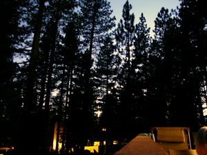 Tahoetrees